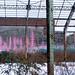 Snow Pink Wasteland