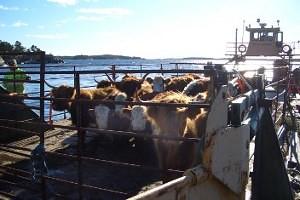 boskapstransport