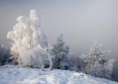 Frozen (Kenny Muir) Tags: winter tree ice fog landscape scotland frozen freezing loch lomond balmaha a900