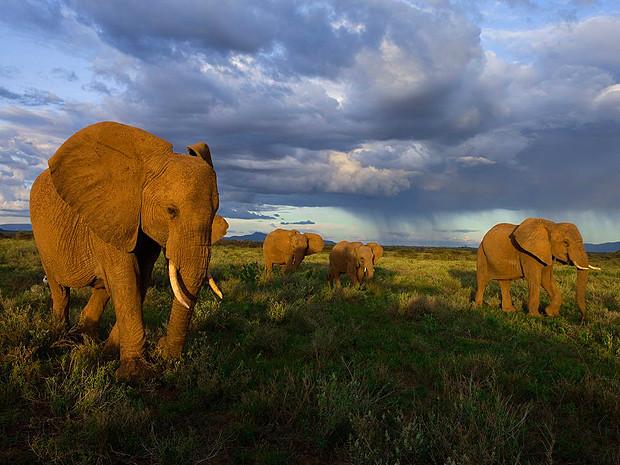 12. Слоны Самбуру, Кения.  Стая слонов в Национальном парке Кении.