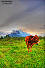 Welcome to Sinabung... (shahreen | amri) Tags: sunset sky green tourism beautiful sunshine animal indonesia landscape volcano cow asia photographer sunsets indah hdr highdynamicrange extraordinary halfnaked alam sigma1020mm beautifulnature beautifulsunset naturelandscape malaysianphotographer greennature tonemapped tonemapping beautifullandscape northsumatra haiwan amazingasia shahreen malaysiaphotographer northsumatera sinabung asialandscape d300s visitindonesia luarbiasa naturetourism ciptaanallah amazingindonesia alamindah nikond300s extraordinaryphotoadventuretravel2010 expat2010 shahre2n allahthecreator alamindahvisit tonemappedpicture malaysianphotgrapher expatdanautobaiii2010 sinabungmount
