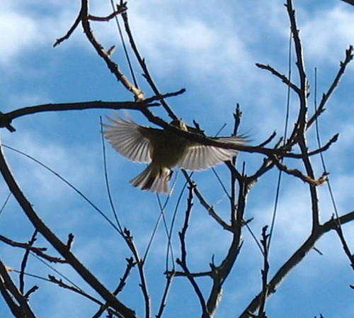 naturenotesbirdfldec10