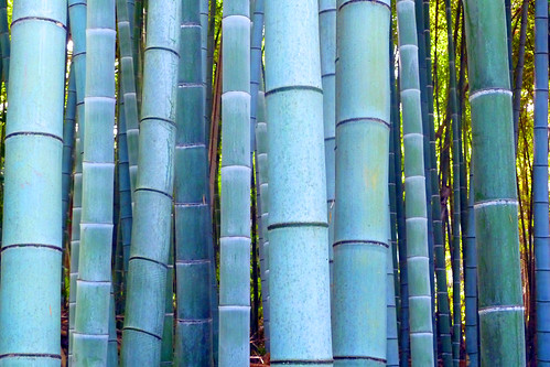 bamboo accumulation
