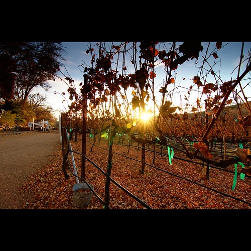Page Springs Vineyard at Sunset