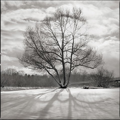 lonely V (martin_jaeger) Tags: schnee winter tree film analog mnchen hasselblad medium format lonely isar baum 500cm mittelformat
