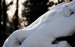 Snow-and-Winter-Sun_DSC_0046_ed1 (Nick Woods Photography) Tags: winter snow sunshine snowscene winterscene