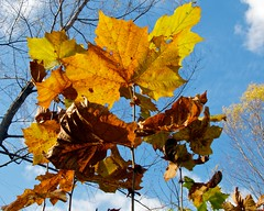 Falls Last Stand (Ken'sKam) Tags: autumn fall nature fallcolor autumncolor fallleavesautumnleaves