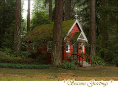 (TLPhotography66 ~) Tags: christmas trees friends light shadow red tree green nature forest buildings portland moss woods nikon flickr shadows friendship portlandoregon seasonsgreetings d60 happyholiday blueribbonwinner sunshadows happygorgeousgreenthursday hggt tlphotography