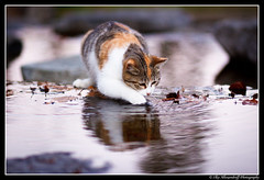 Wet Pussy @ Umeda (Ilko Allexandroff / ) Tags: light white hot reflection green wet cat mouth dark photography photo google interesting flickr open emotion good awesome pussy lion yawn picture kitty more most mostinteresting   ilko    catmoments beautyshoots allexandroff