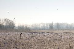 scapagnata_0032 (andrea.prave) Tags: schnee winter parco snow cold ticino farm milano hiver nieve country campagna neve invierno neige provincia kalt inverno fro   freddo froid wwf bosco     arluno vanzago     agricolo mantegazza rogorotto pravettoni andreapravettoni fameta andreaprave
