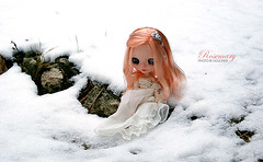 A rose in the winter I