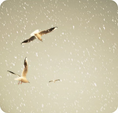 happy christmas (hanna.bi) Tags: christmas venice seagulls snow fake picnik 2010 hannabi