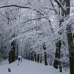 Running in the winter wonderland of Lochem (Bn) Tags: wood winter snow cold forest freshair bomen topf50 woodlands day quiet sneeuw shakespeare tunnel running run athletes jogging topf100 enjoying jog roadwork jogger hardlopen winterwonderland achterhoek tms darkforest lochem beuken deepforest tellmeastory deepinthewoods develuwe 100faves 50faves freshfallensnow silince runninginthesnow endorfines 8degreescelcius saariysqualitypictures runningintheforest bootsgogreen genietenvandenatuur sneeuwinhetbos degelderseachterhoek