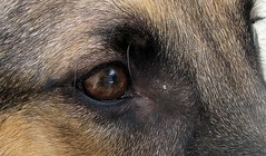 Giant Animal (1) (diegokawasaka) Tags: dog macro eye animal giant micro gore squish
