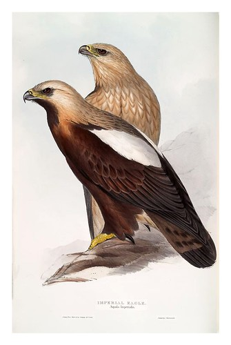 001-Aguila Imperial- The birds of Europe Tomo I-1837- John Gould