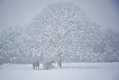 Snow_day_4_201061