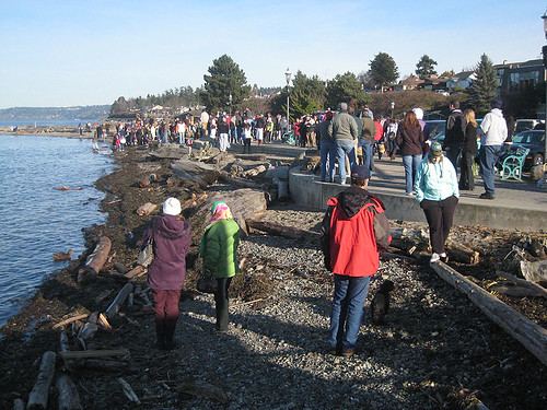 Edmonds Polar Bear Plunge