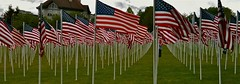 Memorial Day Flags by eddiecoyote