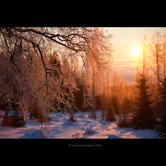 sunny forest (stella-mia) Tags: morning sun norway forest sunrise dof bokeh explore dreamy morningsun 70200mm hightlight explored canon5dmkii sunnyforest veslelien