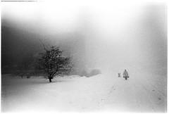 Winter traffic (batuda) Tags: road winter mist d76 om kaunas hp5plus 2835 sanciai