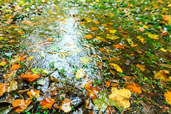 The puddle (Raoul Pop) Tags: autumn fall leaves rain canon puddle flickr seasons unitedstates maryland fallfoliage northbethesda canoneos5d googlephotos