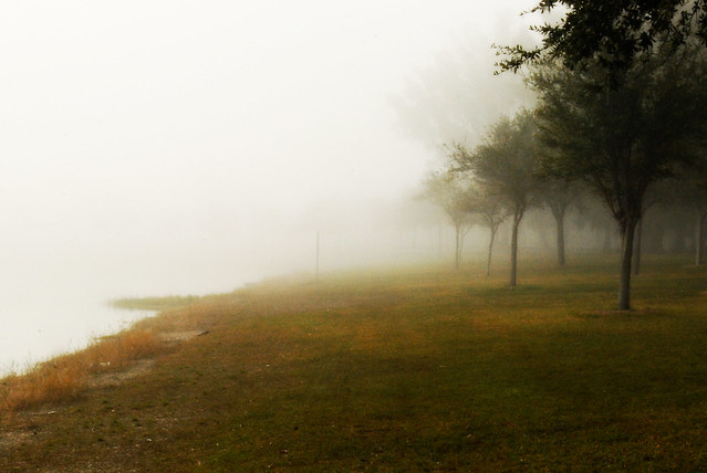 Foggy morning.