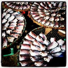ปลาสลิดตากแห้ง