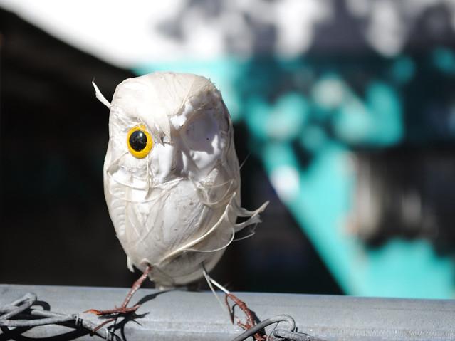 Odd Owl