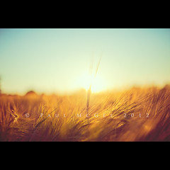 Longing for summer (PMMPhoto) Tags: blue sunset summer colour field barley paul 50mm gold nikon warm dof bokeh 14  mcgee flare nikkor fp 50mmf14 strathaven fuggy 50mmf14g paulmcgee d700 donotusewithoutpriorpermission pmmphoto gettyimagesuklocation paulmcgee welcomeuk