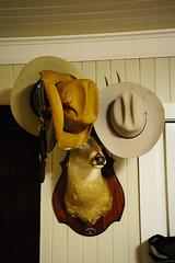 South Texas hat rack (peterlfrench) Tags: ranch rural nikon texas january hats taxidermy deer coastal refugio decor hatrack whitetail southtexas 2011 thirdcoast ranchy dsc6668 d700 refugiotexas pfrench99 peterlfrench southtexashatrack