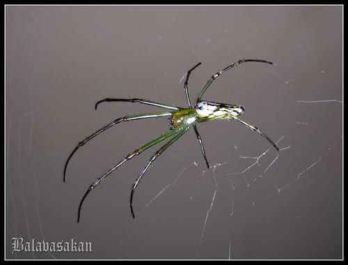 Spider - 3