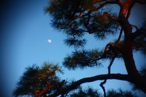 """MOON and PINETREE"" x1.5 TELE KT-1 + PC LENS IN A CAP"