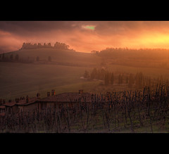 vineyard (Orione Photographer) Tags: settembre2011challengewinnercontest