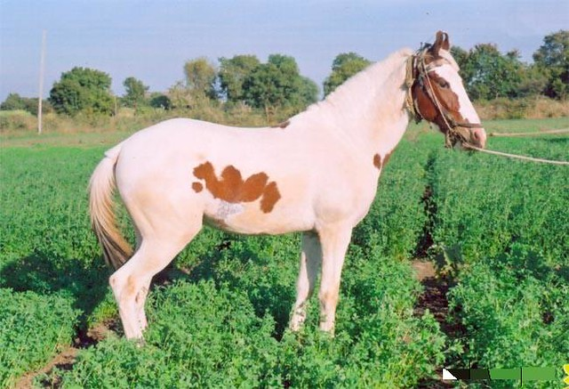 Islamic Miracle Picture - Allah's name appears on a horse in India