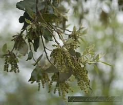 gure artie (goiuri aldekoa-otalora) Tags: naturaleza arbol autum natura otoo artie udazkena arbola fantasticflower zuahitza