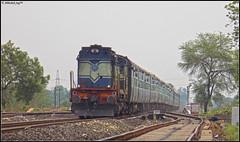 KJM WDM-3A (Abhishek Jog) Tags: chugging kjm wdm3a 16586 swiftly accelerating towards jabalpur decent speed powering 16230 bsbmys express krishnarajapuram deori jbp from kte katni bsb mys banaras varanasi mysore varanasimysore adtl adhartal jn junction
