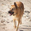 IMGP3374 (jamin.sandler) Tags: pentaxistds palmachimbeach smcpentaxm2435mm dog