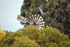 Fortescue's IXL chain-drive windmill with kookaburra; Bywong, New South Wales, Australia (sarracenia.flava) Tags: ixl windmill chain driven fortescues australia new south wales fortescue bywong bungendore macs reef kookaburra