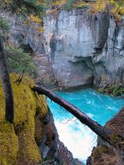 DSC09964ok (nininy13) Tags: park fall jasper national alberta sunwapta