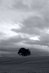Feeling Isolated (The Green Album) Tags: tree leaves standing moody branches trunk fields solitary atmospheric isolated