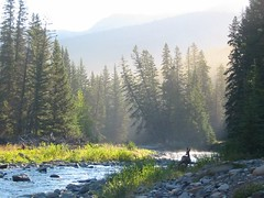 East slopes (greasy lightning) Tags: canada mountains creek sunrise fishing rocky deer alberta trout racehorse