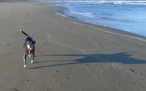 Fetching a ball on Ocean Beach