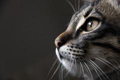 [フリー画像] 動物, 哺乳類, ネコ科, 猫・ネコ, 201012051100