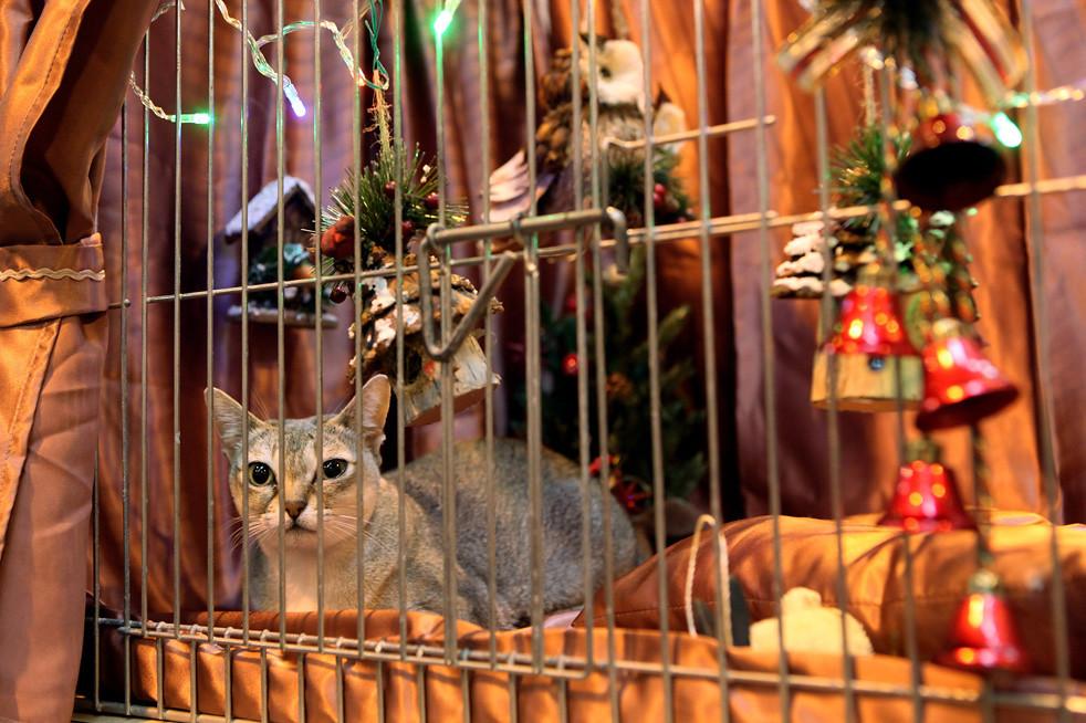 1113 Выставка кошек в Англии