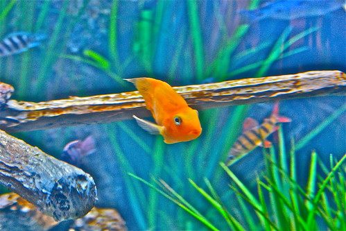 Fishbowl 7