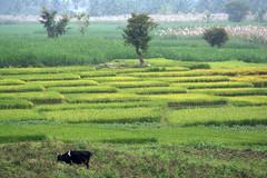 Srirangapatna 077.CR2