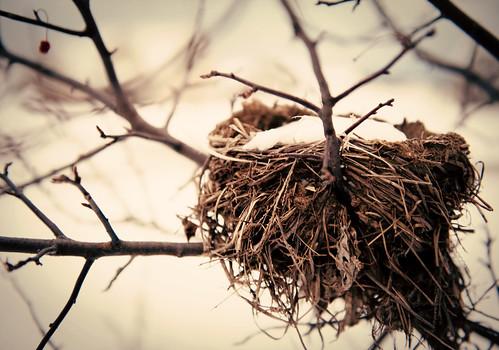 winter-nest