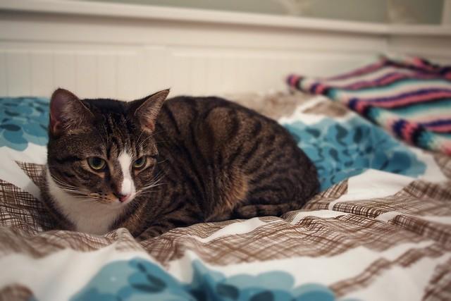 Yoni's new fave nap spot