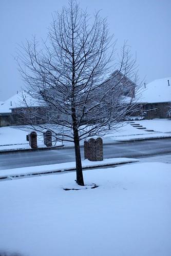 feb snow 11 - 1