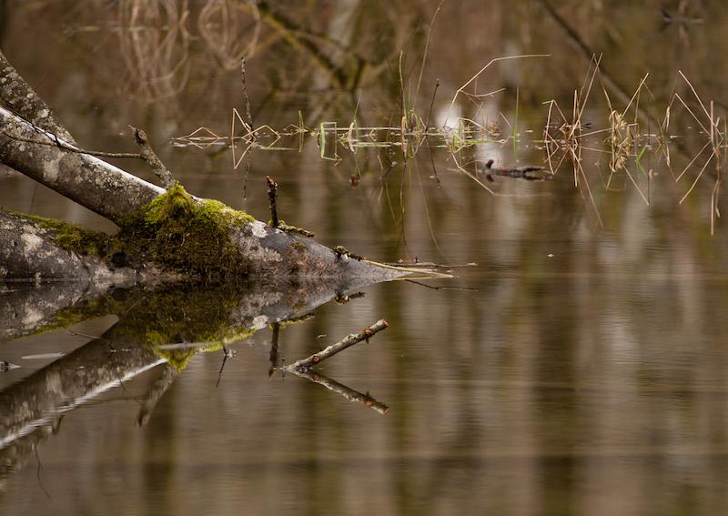 pond_stack